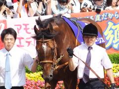 20150607 東京11R 安田記念(G1) モーリス 06