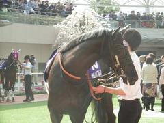20180401 阪神11R 大阪杯(G1) サトノノブレス 05