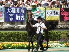 20180527 東京8R 青嵐賞(1000) パリンジェネシス 19
