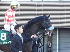 20180114 中山11R 京成杯(G3) ダブルシャープ 15