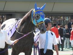 20140511 東京11R NHKマイルカップ(G1)アドマイヤビジン02