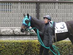 20160130 東京3R 3歳未勝利 アイルーロス 07