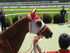 20150425 京都4R 3歳未勝利 レーヌドブリエ 20