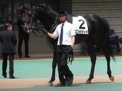 20150523 東京3R 3歳未勝利 コスモポッポ 06