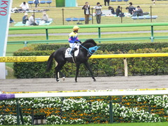 20151010 東京4R 3歳上障害未勝利 サウンドアラムシャ 10