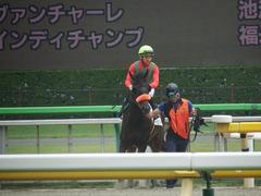 20190601 東京7R 3歳牝馬1勝 ラプターゲイル 13