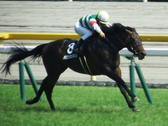 20180527 東京8R 青嵐賞(1000) パリンジェネシス 25