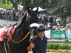20140503 東京11R 青葉賞 ショウナンラグーン 07