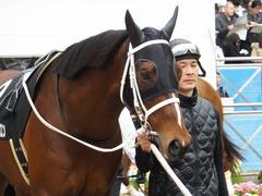 20150321 中山10R 韓国馬事会杯 ショウナンアポロン  08