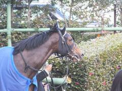 20140126 中山10R ゴールウェイ 14
