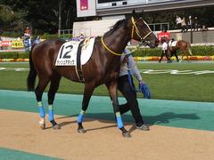 20141026 東京4R ラッシュアタック 03