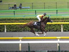 20150627 東京11R 夏至S ランドマーキュリー 11