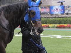 20141129 東京5R 2歳メイクデビュー タニオブキャップ 04