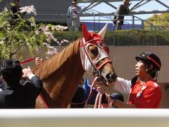 20150404 阪神4R 3歳未勝利 レーヌドブリエ 09