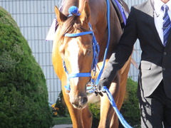20151025 京都11R 菊花賞(G1) マッサビエル 10
