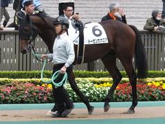 20141108 東京4R トーセンカナロア 02