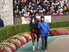 20151129 東京10R ウェルカムS アッシュゴールド 06