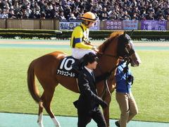 20150221 東京10R アメジストS(1600) アッシュゴールド 12