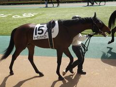 20150221 東京5R 3歳未勝利 トーセンカナロア 08