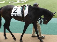 20160423 東京4R 3歳未勝利 ラルゴランド 06