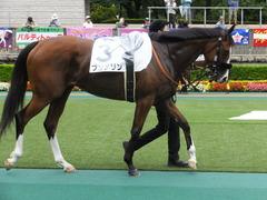 20170625 東京1R 3歳牝馬未勝利 プンメリン 14