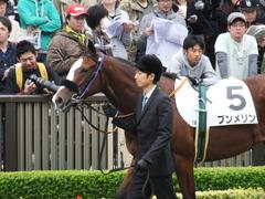 20161030 東京1R 2歳未勝利 プンメリン 04
