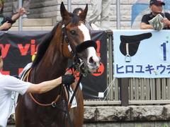 20170625 東京1R 3歳牝馬未勝利 プンメリン 16