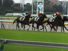 20141026 東京8R オウケンブラック 13