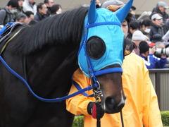 20160130 東京10R クロッカスS モーゼス 10