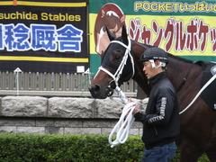 20151031 東京10R 赤富士S ショウナンアポロン 03