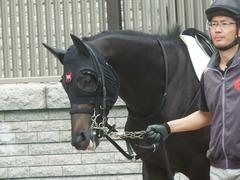 20190622 東京3R 3歳未勝利 ショウナンサジン 06