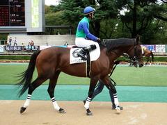 20171007 東京4R 3歳上障害未勝利 トーセンカナロア 10