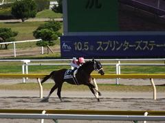 20140928 新潟8R ショウナンアポロン 16