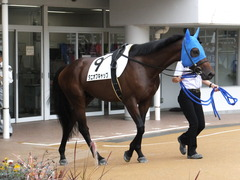 20150927 中山3R 3歳未勝利 タニオブキャップ 02