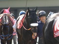 20140503 東京11R 青葉賞 ショウナンラグーン 05