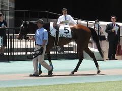 20170506 東京5R 3歳牝馬500万下 ビルズトレジャー 07