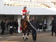 20161224 中山11R 師走S(OP) ショウナンアポロン 15