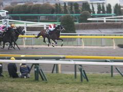 20150222 東京11R 金蹄S ショウナンアポロン 12