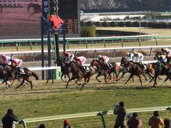 20140118 中山競馬場 ツクバアスナロ 16