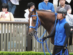 20150621 東京10R 芦ノ湖特別 マッサビエル 03