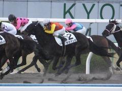 20170114 京都8R 4歳上牝馬500万下 サラマンカ 15