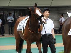 20170625 東京1R 3歳牝馬未勝利 プンメリン 09