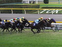 20141102 天皇賞(秋) サトノノブレス&ラブイズブーシェ 02