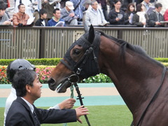 20141108 東京4R トーセンカナロア 09