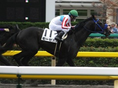 20161010 東京6R (500) モーゼス 18