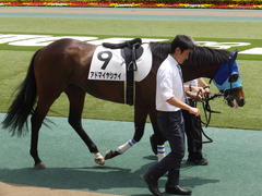 20170507 東京6R 3歳(500) アドマイヤシナイ 13