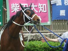 20190518 東京4R 3歳未勝利 オビワンズドーン 11