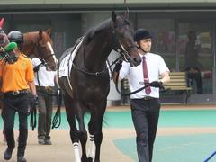 20150614 東京3R 3歳未勝利 コスモポッポ 02