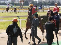 20150221 東京6R 4歳上500万下 マイネルグルマン 09