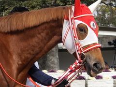 20150207 京都5R 3歳未勝利 レーヌドブリエ 11